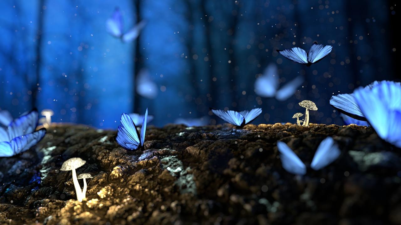 butterfly-2049567_1280
