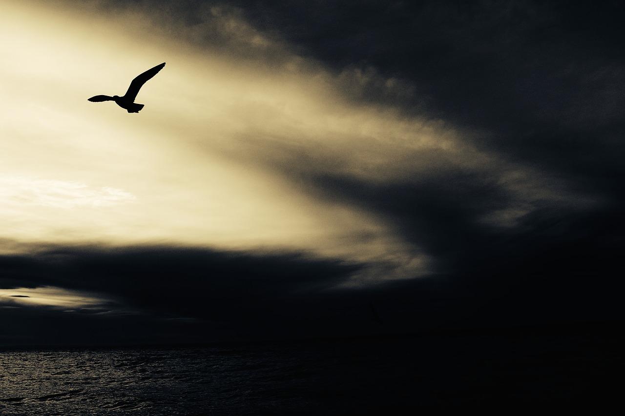 seagull-768785_1280