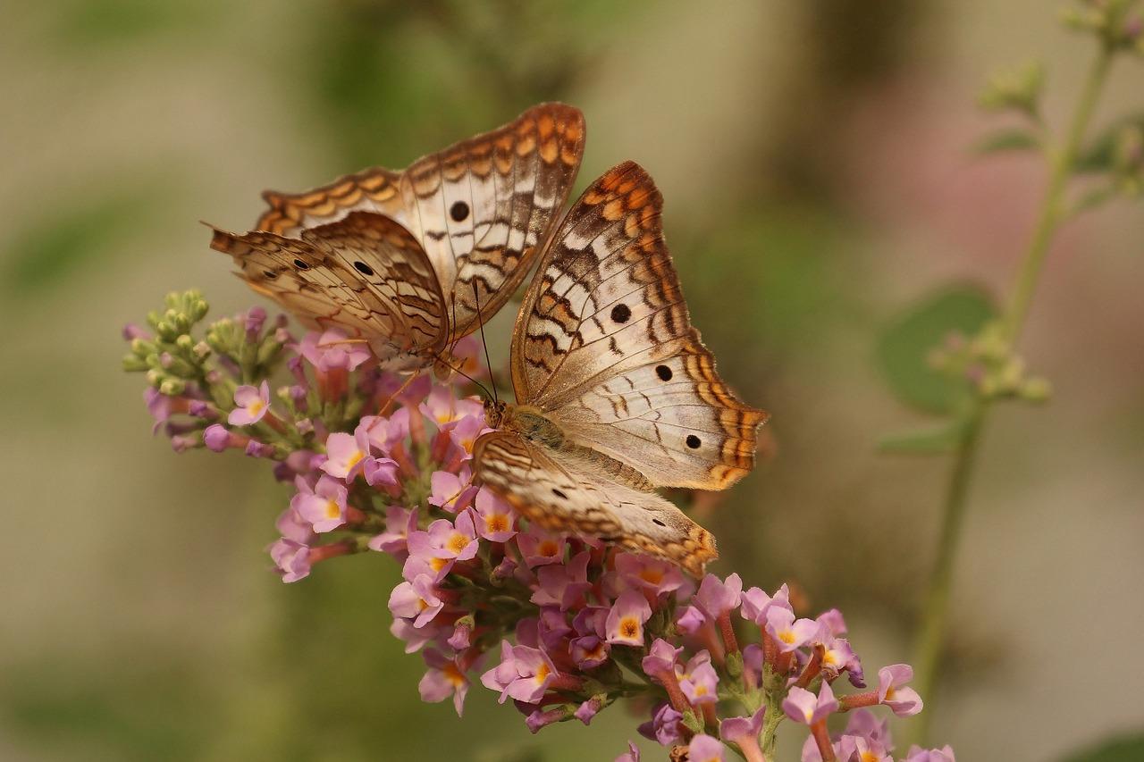 butterfly-743549_1280